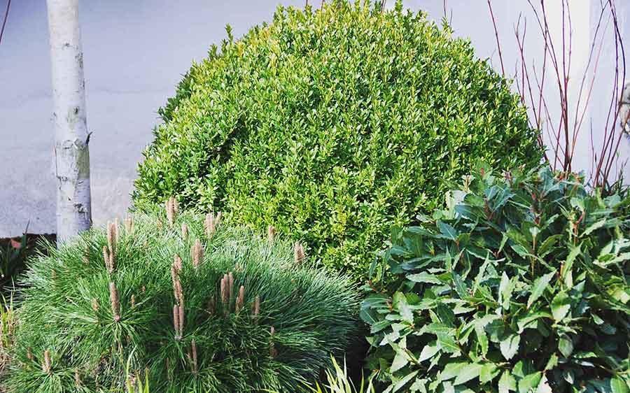 Dyke Road Avenue garden design