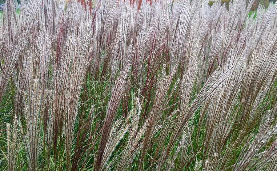Brighton garden designer Roundwood review