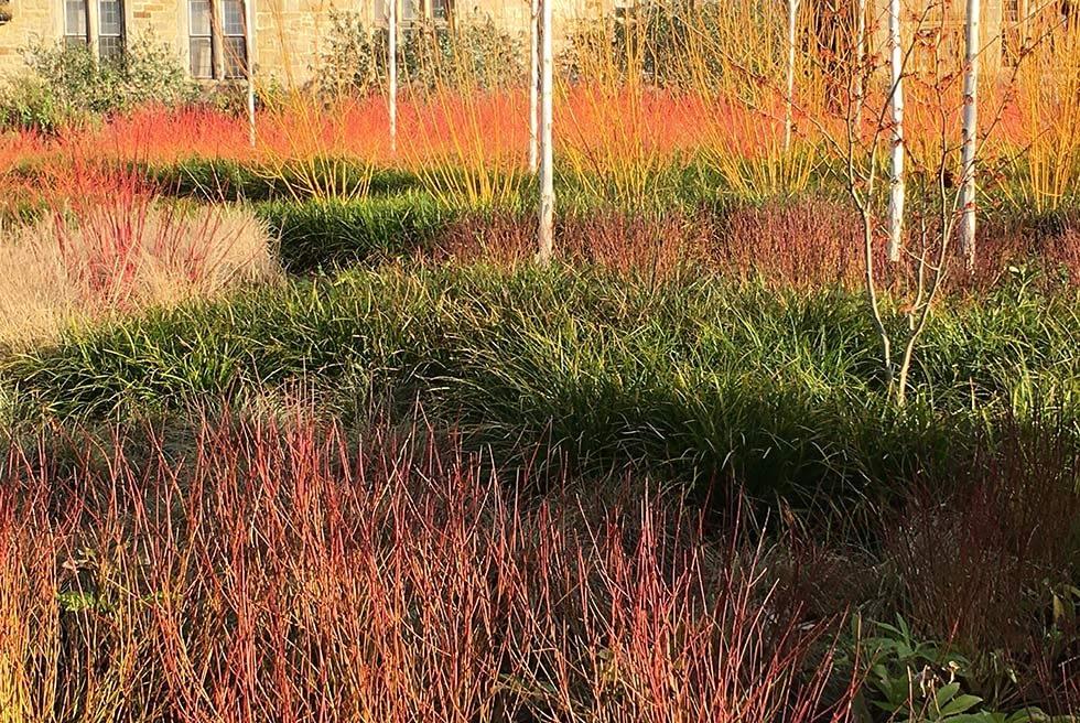 planting for winter interest uk