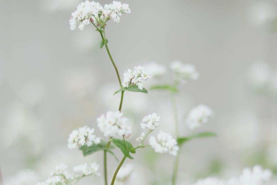 landscape gardener sussex review
